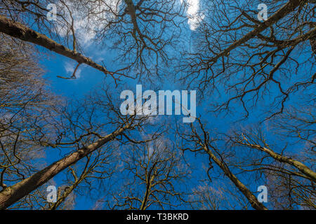 View to the sky in woodland. - Stock Image