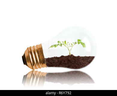 Young seedling growing out of soil inside light bulb with copy space. Concept of new life or beginning, environmental conservation, ecology or green m - Stock Image
