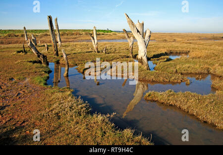 A fine art view of old weathered posts and reflections at the edge of salt marshes in North Norfolk at Thornham, Norfolk, England, UK, Europe. - Stock Image