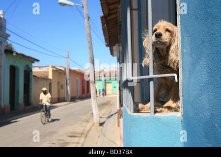 Cuba Trinidad A cocker spaniel behind window bars Photo CUBA0878 Copyright Christopher P Baker - Stock Image