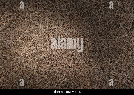full frame image of a fallen twigs on ground with sunlight and shadows. concept of nature background - Stock Image