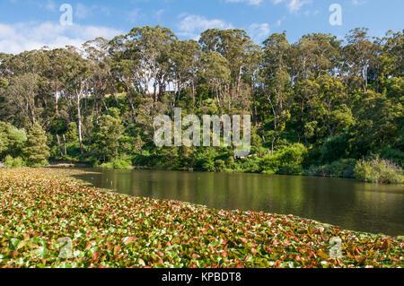 At Jubilee Lake, Daylesford, western Victoria, Australia - Stock Image