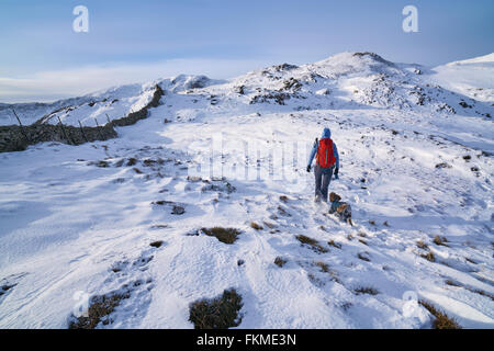 Hiker walking their dog along Hartsop Above How that leads towards Hart Crag. English Lake District. - Stock Image