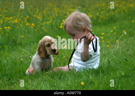child with cocker spaniel puppy - Stock Image