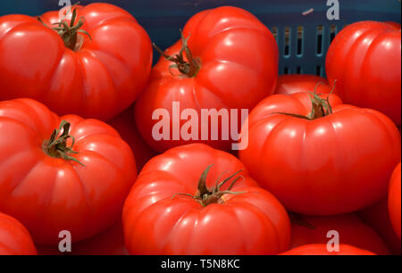 big red beef tomatoes on a market in bavaria, group of ripe and sweet tomatoes - Stock Image