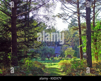 Road in wild pine forest to old small house - Stock Image