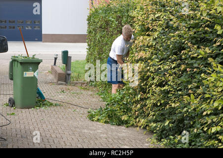 Man cuts his hedge with a hedge trimmer - Stock Image