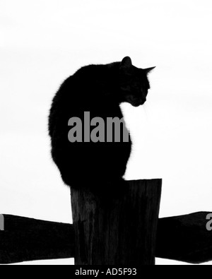 cat on fence - Stock Image