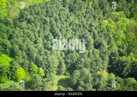 Aerial view of woodlands consisting of Coniferous Trees - Stock Image
