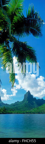 Panoramic image of Mouaroa Peak above Opunohu Bay with overhanging palms on Moorea Island in French Polynesia - Stock Image