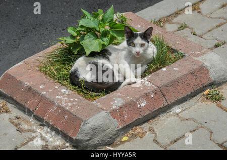 Street cat in Istanbul. - Stock Image