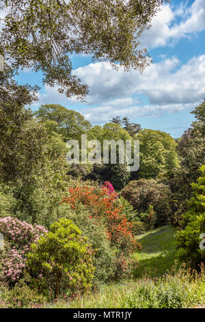 Rhododendron Valley at the center of Trebah Garden, Cornwall, England, UK | Rhododendron Valley im Zentrum von Trebah Garden, Cornwall, England, UK - Stock Image
