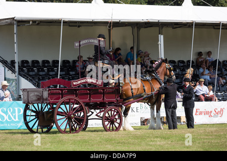A traditional ale cart and shire horse are judged at a county show in England - Stock Image