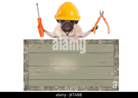 constructor pug dog holding pliers and screwdriver behind blank old wooden sign, isolated on white background - Stock Image