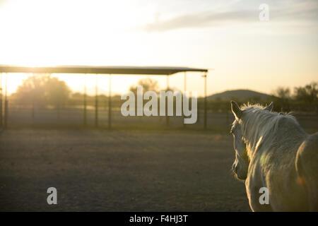 White Stallion Ranch - Stock Image