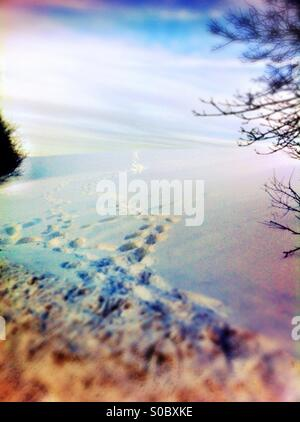 Footprints in snow - Stock Image