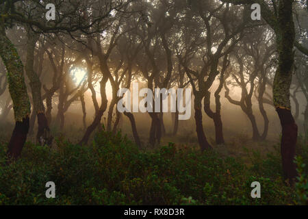 Glimmer of light in the wood immersed in the fog. - Stock Image