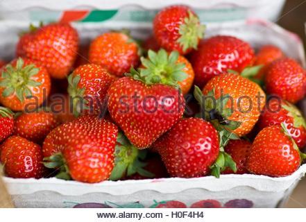 BLWX108308 [ (c) blickwinkel/McPHOTOx/PhotoPoster Tel. +49 (0)2302-2793220, E-mail: info@blickwinkel.de, Internet: - Stock Image