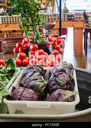 Fresh red cabbage, basil and tomatoes on display, for sale, in a roadside farm or farmer's market in rural Alabama, USA. - Stock Image