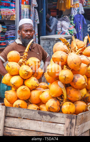 Man selling coconuts in the Pettah districy of Colombo, Sri Lanka - Stock Image