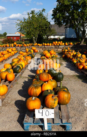 Pumpkins for sale on a farm in Sweden - Stock Image