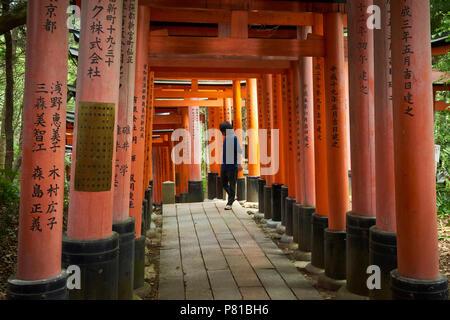 A visitor to Fushimi Inari Shrine walks along tunnel of Senbon Torii gates in Kyoto, Japan. - Stock Image