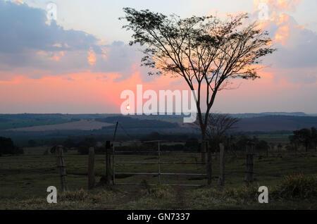 sunset with silhouetted tree and dust, Brazil - Stock Image