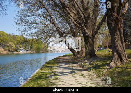 Po river bank path with old trees and people in a sunny day, blue sky in Piedmont, Turin, Italy - Stock Image