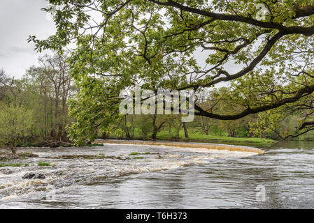 The Horseshoe falls on the river Dee at Llangollen where the Llangollen canal gets its water supply. - Stock Image