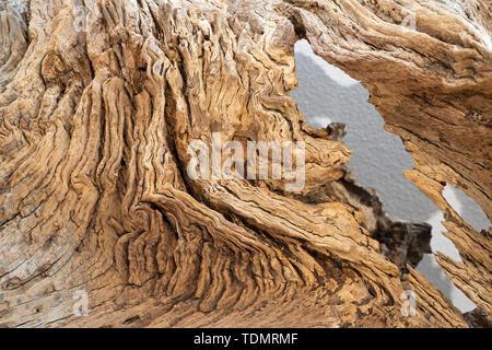 The detail of modern wood decorative oak sculpture. - Stock Image