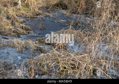 A frozen, flodded meadow with bare  and broken winter grass straws in early spring sunshine and cold weather. - Stock Image