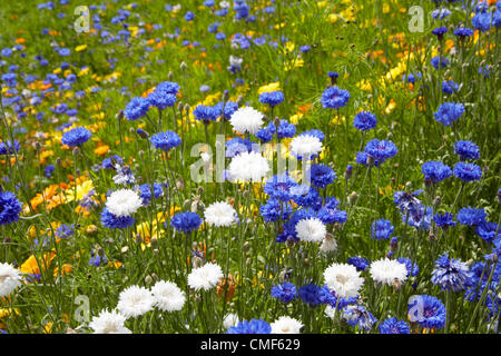 Great British Garden wildflower meadow flowers at Olympic Park, London 2012 Olympic Games site, Stratford London - Stock Image
