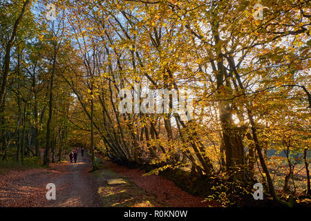 Walkers on 'Byway Open To All Traffic' on Leith Hill. Coldharbour, Surrey, England. - Stock Image