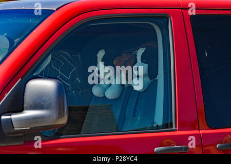 Toy dogs looking over seat in vehicle - Stock Image