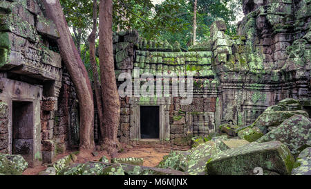 Large trees growing over the well preserved  Ta Prohm temple in Cambodia - Stock Image
