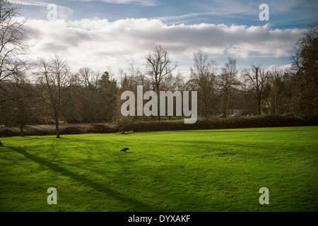 A bird near the YSP Learning and Cafe at the Yorkshire Sculpture Park. - Stock Image