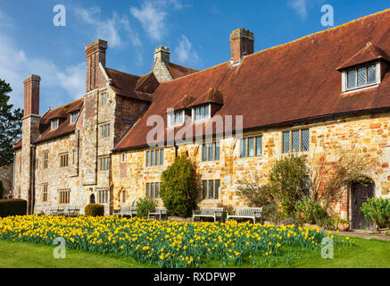 Display of Daffodils, Michelham Priory. - Stock Image