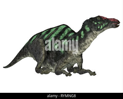 Maiasaurus Dinosaur Head - Maiasaurus was a large herbivorous dinosaur that lived in Montana during the Cretaceous Period. - Stock Image