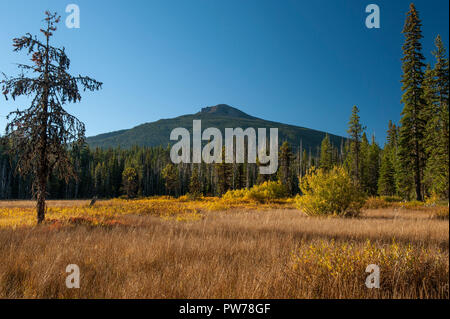 Olallie Butte rises above Olallie Meadow in Oregon's Mt. Hood National Forest, morning light - Stock Image
