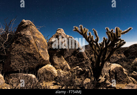Rocky Chollo Cactus - Stock Image