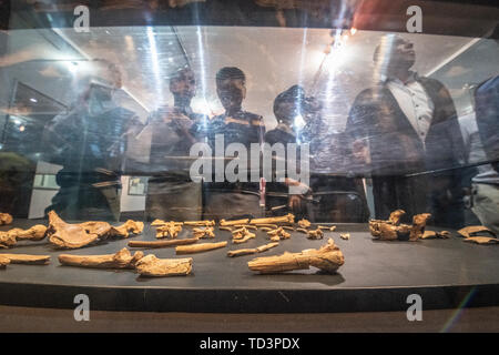 Students and visitors alike look at the remains of one of the earliest human ancestors, Lucy,  on display within the National Museum of Ethiopia, Addi - Stock Image
