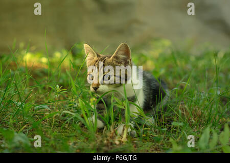 Beautiful domestic kitten is lurking in a grass. The kitty, hiding out in the shade, is partially lit by the warm sunlight. - Stock Image