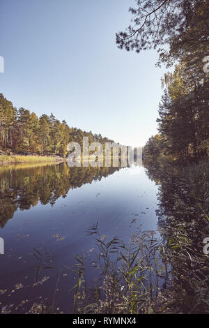 Forest reflected in a lake, color toning applied. - Stock Image