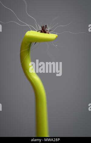 A green plastic tick remover complete with a tick removed from a dog with clump of hair. - Stock Image