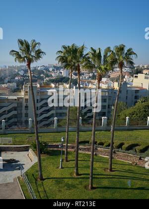 WashingtonIa Robusta Palm trees (Mexican fan palm). La Batería Park, Torremolinos, Málaga, Spain. - Stock Image