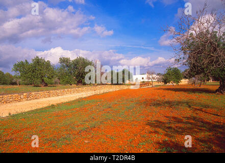 Country house. Sant Miquel de Balansat, Ibiza, Balearic Islands, Spain. - Stock Image