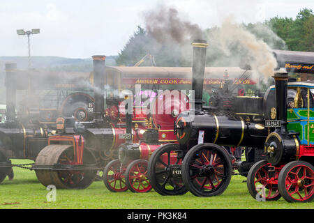 Steam Traction Engines at a Vintage Vehicle Rally - Stock Image