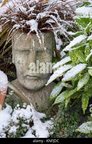 Garden container planted with ornamental grass Uncinia Rubra Red Hook Sedge, in winter conditions. - Stock Image