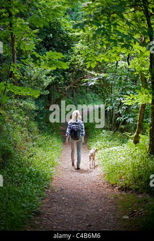 UK, Dorset. A woman walks her dog through the dappled shade of a forest in Dorset. MR. - Stock Image