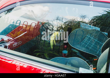 A banana skin left on a gearstick in a red Fiat 500 car - Stock Image